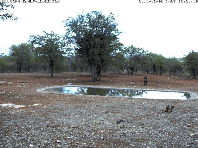 time-lapse frame, Giraffes  webcam