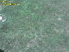view from Sparta WX on 2019-08-05